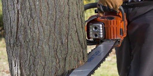 مجازات قطع درخت